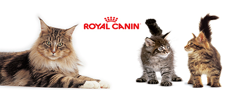 Royal Canin kattmat